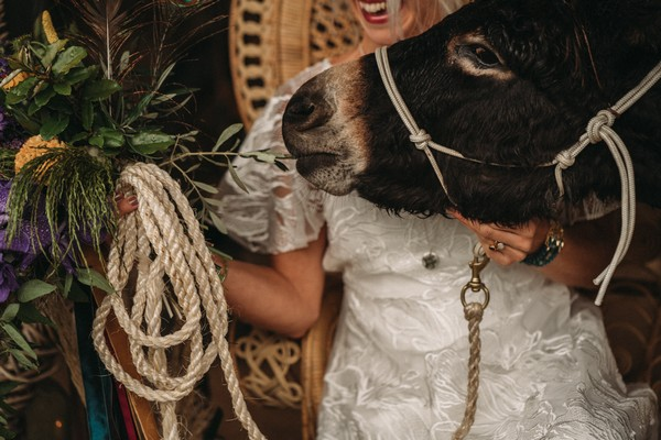 brown donkey's face with reins being held by bride