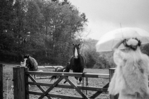 black and white image of horse walking toward bride under umbrella